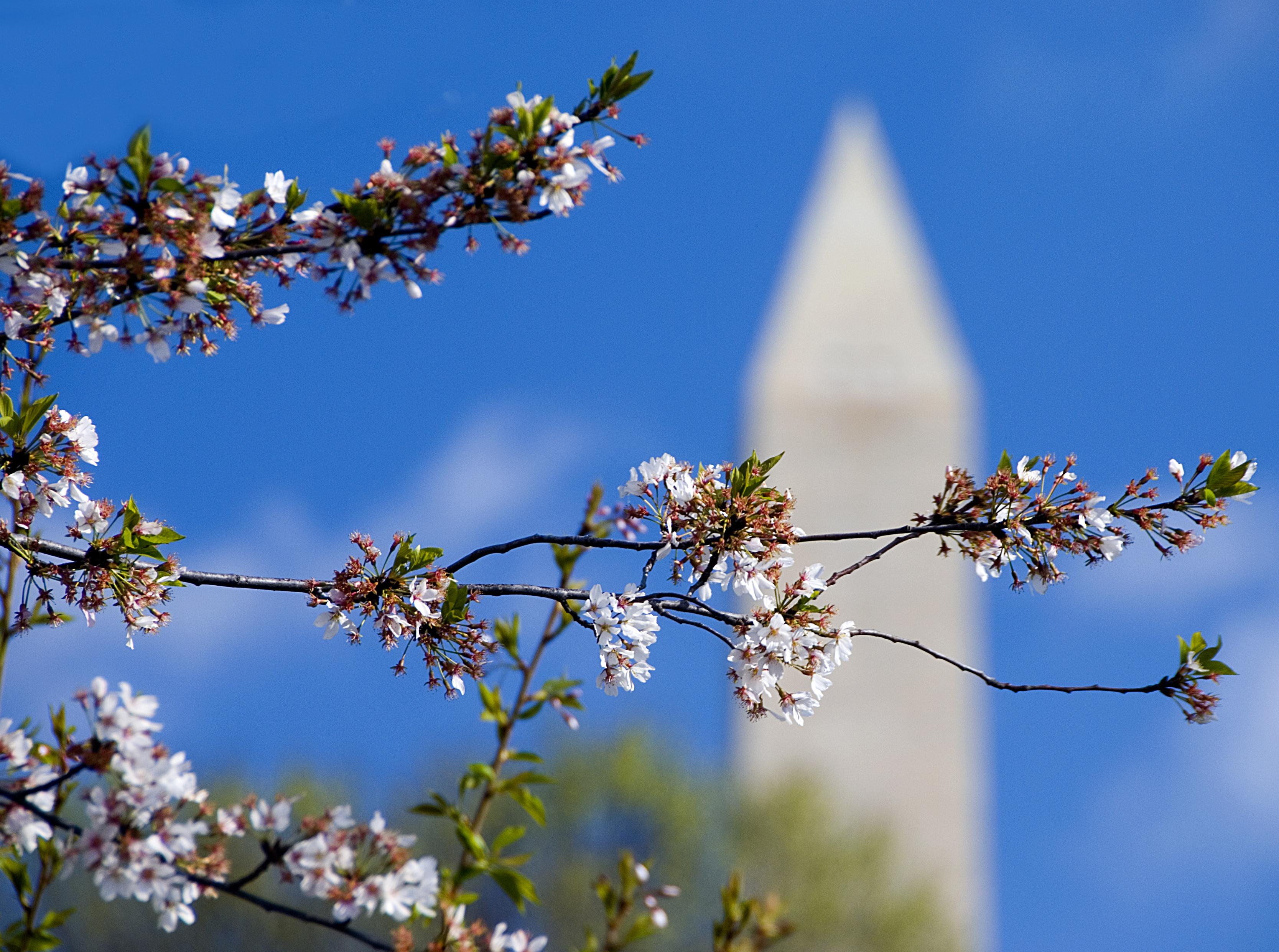 Washington DC April 2007