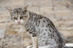 Cat - Budva