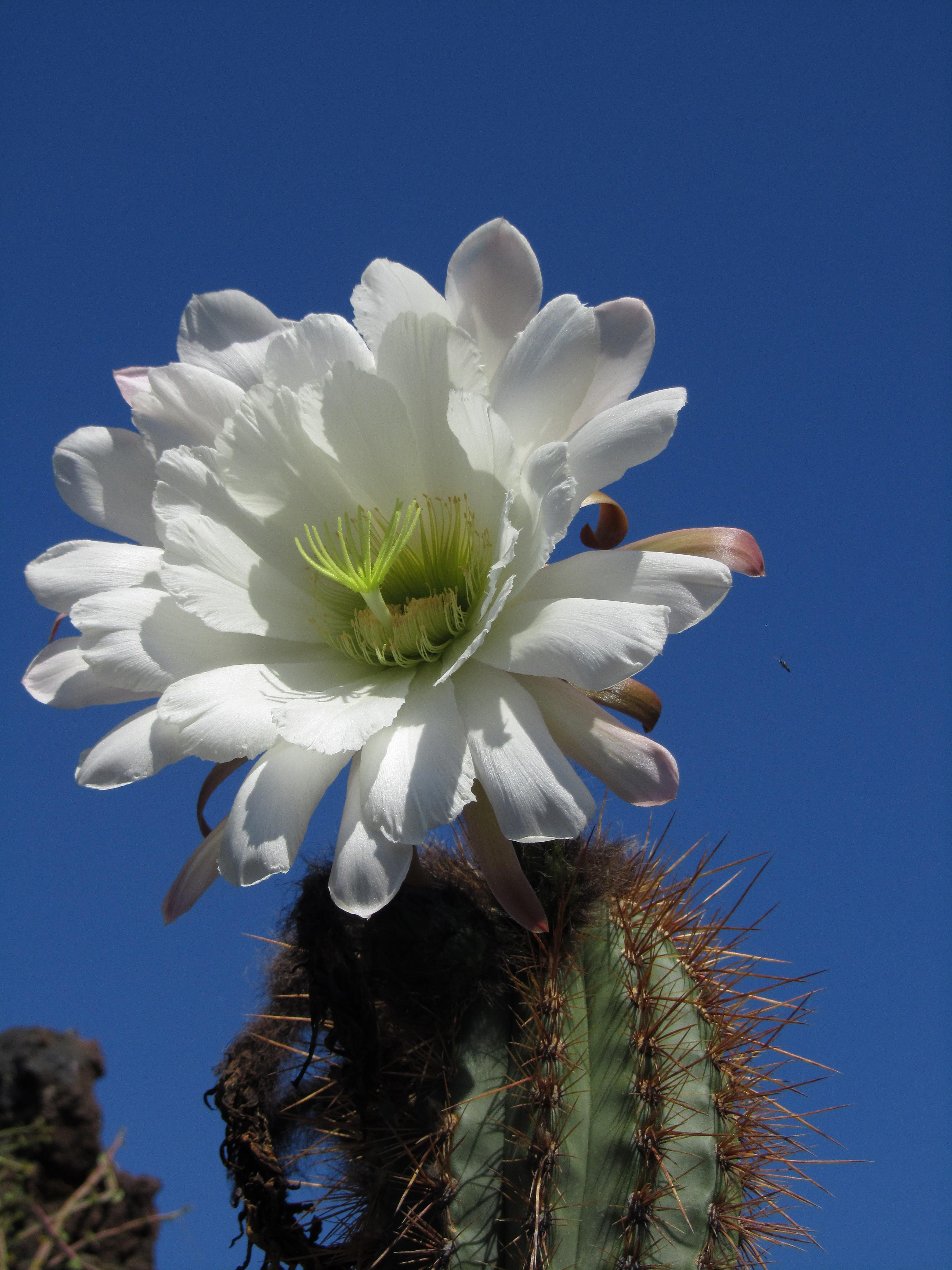 Cactus Garden - Lanzarote
