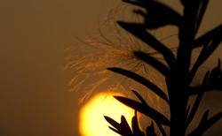 Sunset Macro
