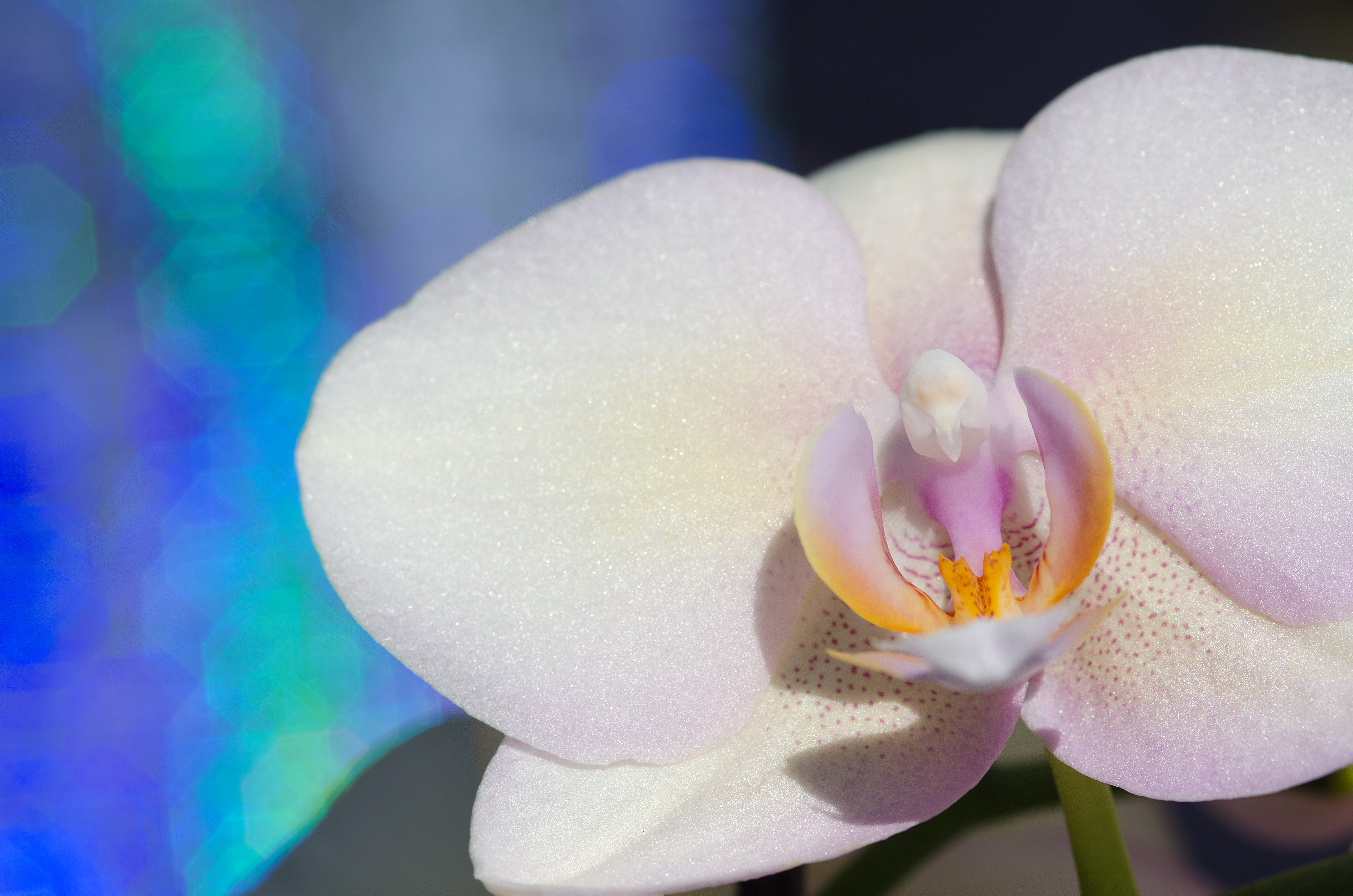 Portrait of an Orchid