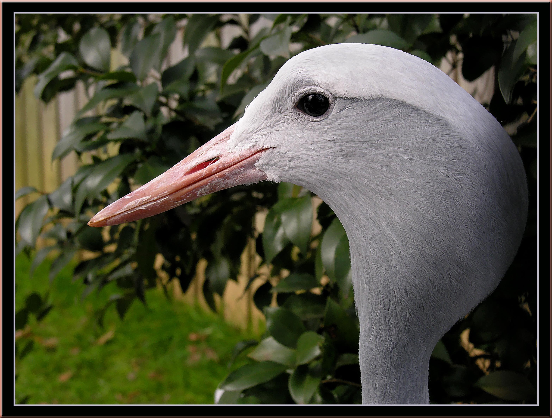 Washington Zoo 2006