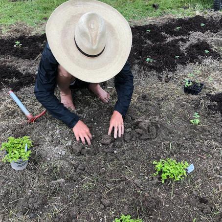 Bulk Herbs from Small Farms