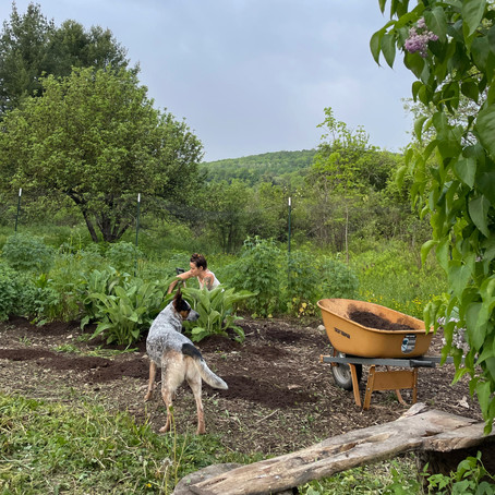 Transitioning dense fields of honeysuckle to native meadows & herb gardens: reflections from year 3