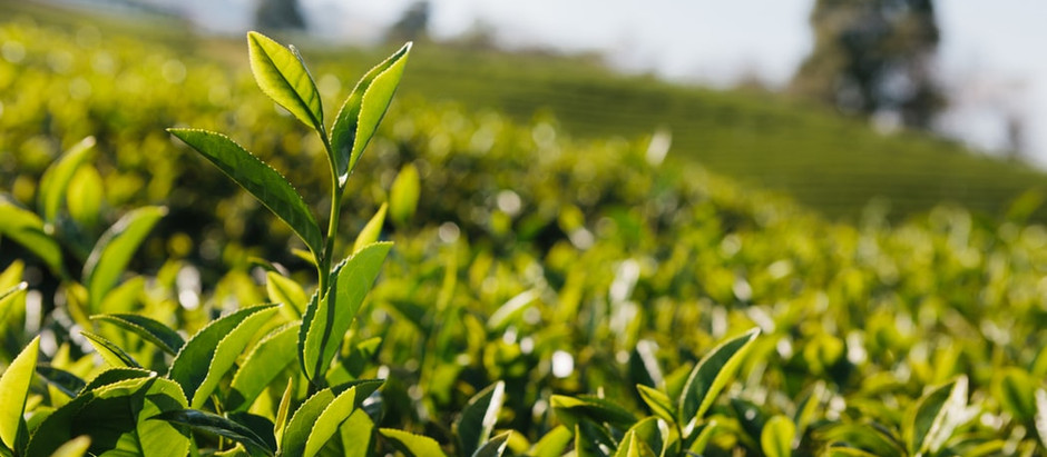 Kenyan Tea, the Amazing Journey...