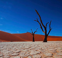 Dead tree in Sossusvlei Namibia National Park.