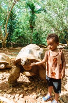Giant Turtle Nosy be, Madagascar