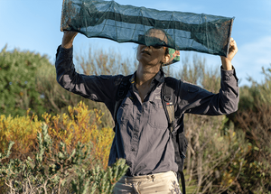 © Charles Thomas/AWC - Dr Viyanna Leo checks a funnel trap for reptiles.