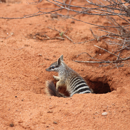 Translocation program set to secure the future of 21 threatened species