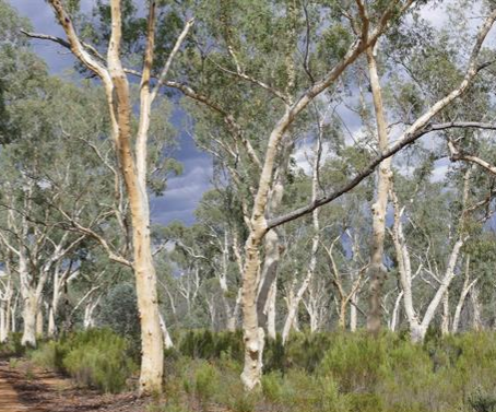 AWC to partner with NSW at Pilliga Nature Reserve and Mallee Cliffs National Park