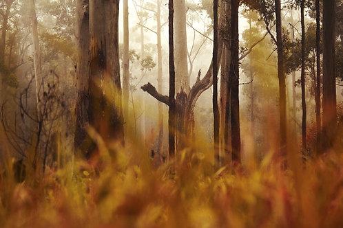 Schlerophyl Forest