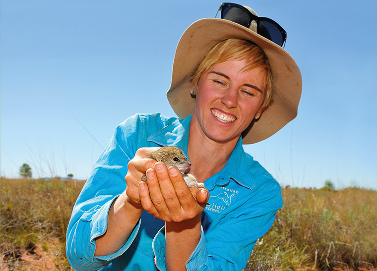 © Wayne Lawler/AWC - AWC Ecologist Dympna Cullen with a Mulgara that was captured, assessed for condition and released during a fauna survey at Newhaven Wildlife Sanctuary.