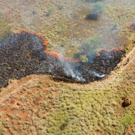Fighting fire with fire to protect the central Kimberley's threatened wildlife