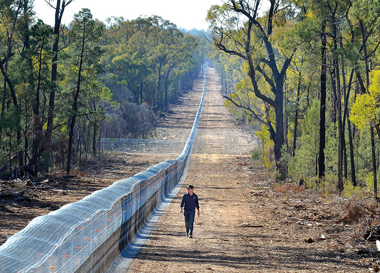 © Wayne Lawler/AWC - The 32.1 kilometre Pilliga conservation fence creates a 5,800 hectare cat and fox-free safe-haven for wildlife.