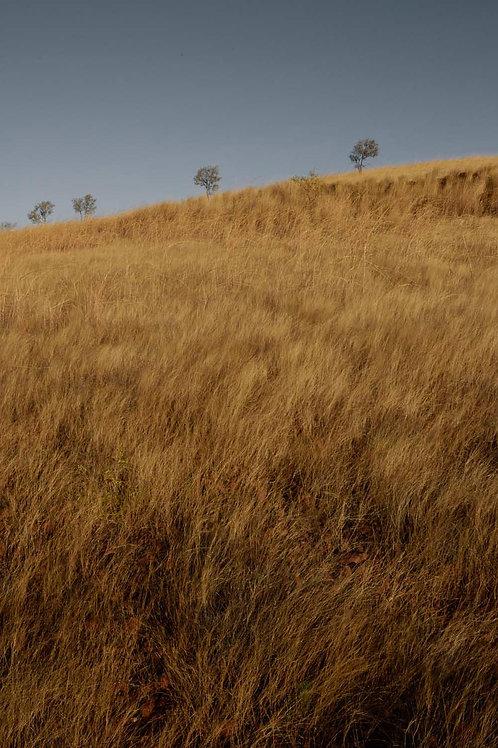 Subtropical Grasses