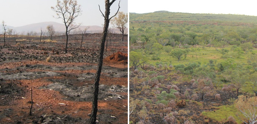 © AWC - Late dry season wildfires (left) are 90% thorough. AWC's controlled burns (right) are cool and patchy and leave plenty of food and shelter for wildlife to hide.