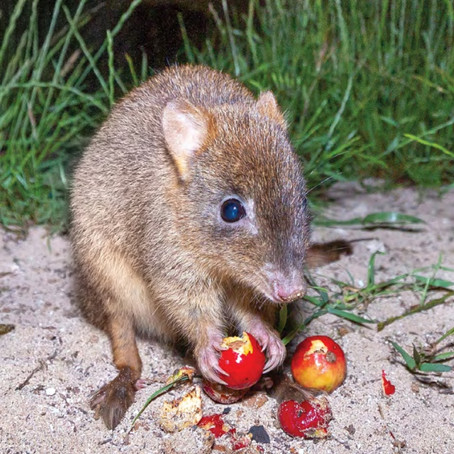 Benchmarking AWC's progress at two NSW National Parks