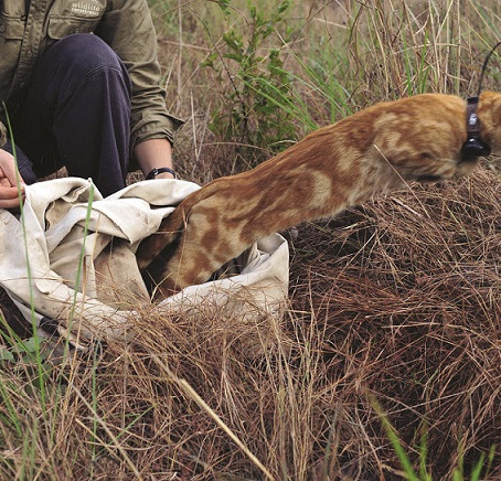 Feral predator control for life beyond the fence