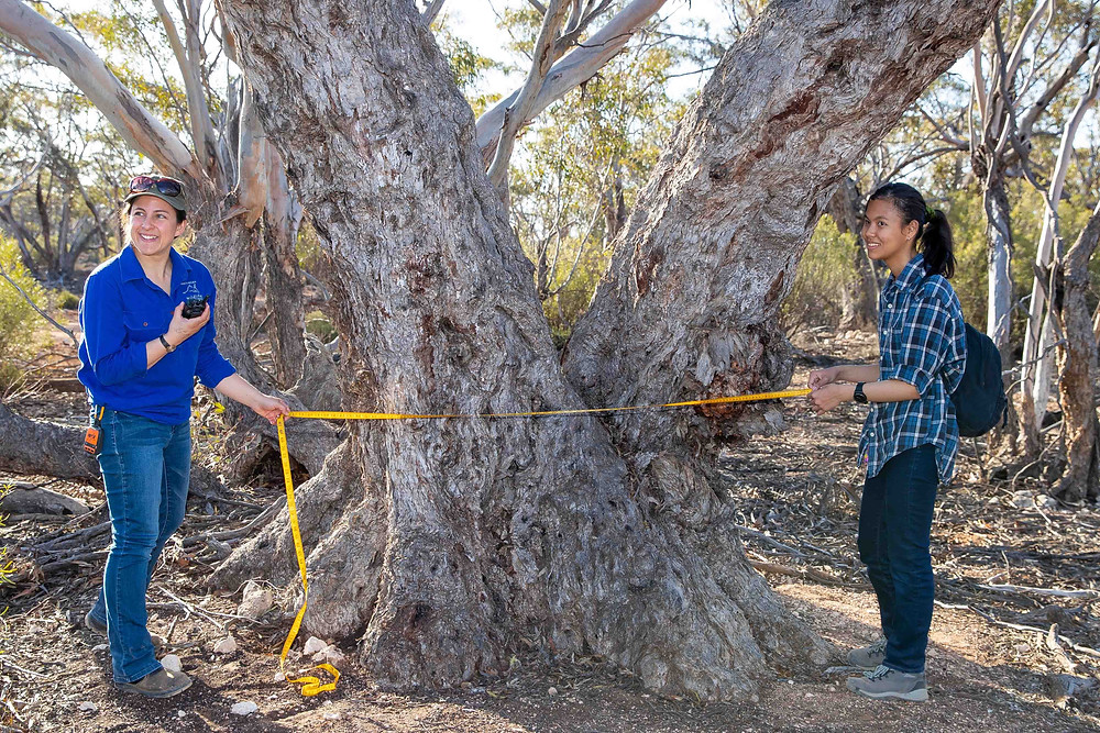 © Brad Leue/AWC - Yookamurra offers activities and overnight camps for schools and universities which focus on teaching students about conservation and AWC's science-based approach to protecting Australia's wildlife.