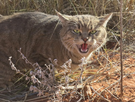 Feral Cat Matching Challenge increased to $1.5 million