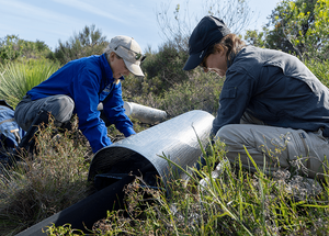 © Charles Thomas/AWC - Viyanna Leo and AWC Intern Mareshell Wauchope place a funnel trap.