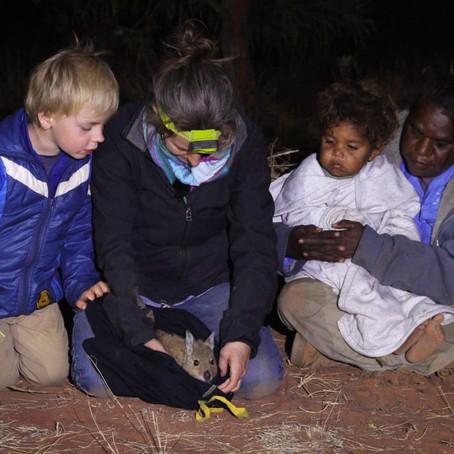Endangered Mala released into biggest feral predator-free area on mainland Australia