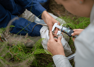 © Charles Thomas/AWC - Wildlife ecologists measure the hind foot of the Bush Rat.