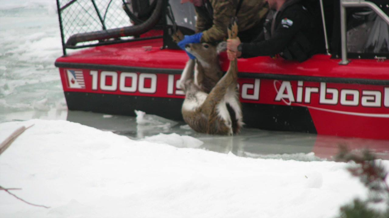 Deer Rescued From Ice By Wisconsin DNR