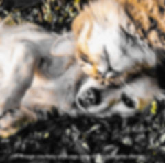 Cat&Dog Friends_B.jpg