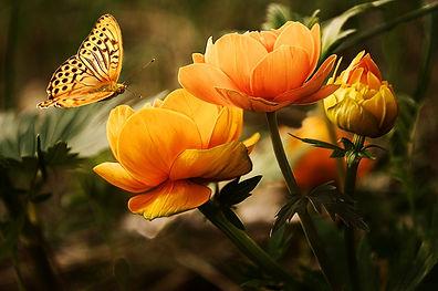 orange-flower-with-butterfly-87452.jpg