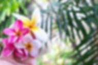 pexels-photo-433539.jpg