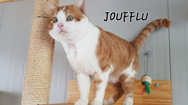 Joufflu