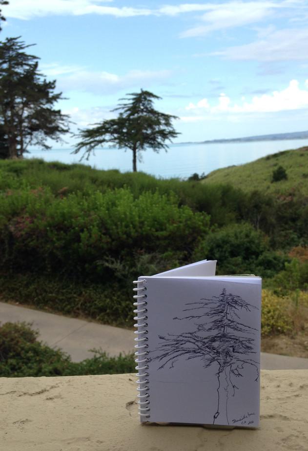 Santa Cruz Sketch