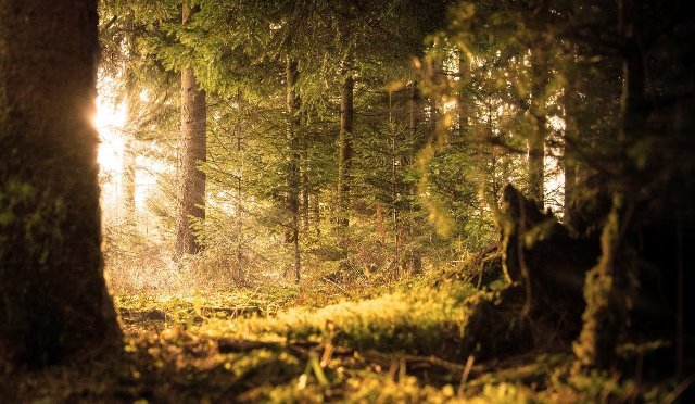 forest-2169285_1920_web.jpg