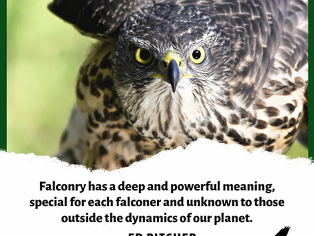 Falconry quotes