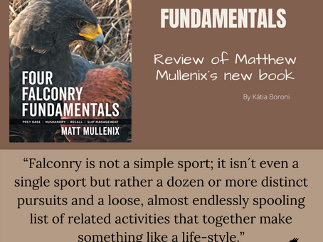Four Falconry Fundamentals