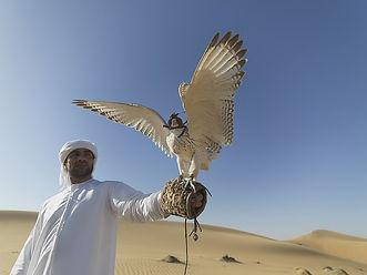 falcon-1264605_640.jpg