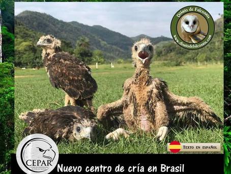 Nuevo criadero comercial de Aves de Presa