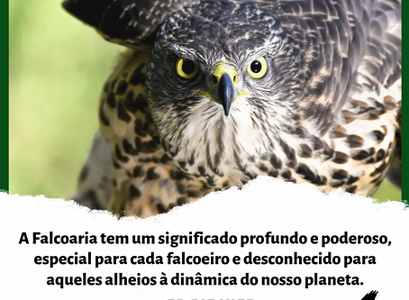 Citações sobre a Falcoaria