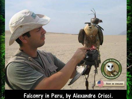 Falconry in Peru