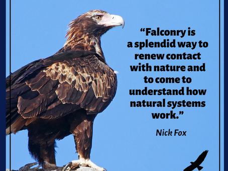 Falconry and modern world