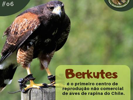 Berkutes, o primeiro centro de reprodução não comercial de aves de rapina do Chile