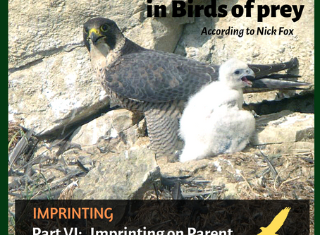 Birds of prey imprinting on parents
