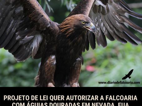 Falcoaria com águias douradas em Nevada, EUA.