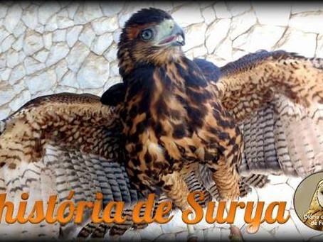 A história de Surya