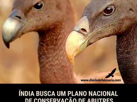 Índia busca um plano nacional de conservação de abutres
