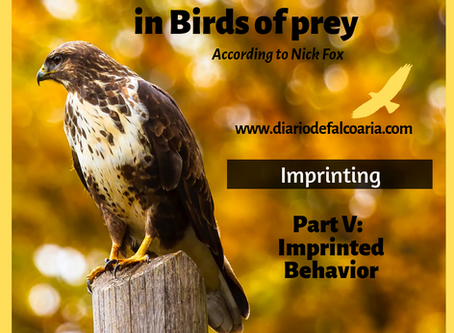 Imprinted Behavior of birds of prey
