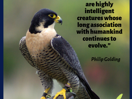 Falconry quote - 24-06-2019