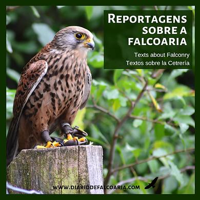 diariodefalcoaria (1).png