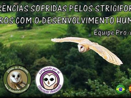 STRIGIFORMES BRASILEIROS EM PERIGO